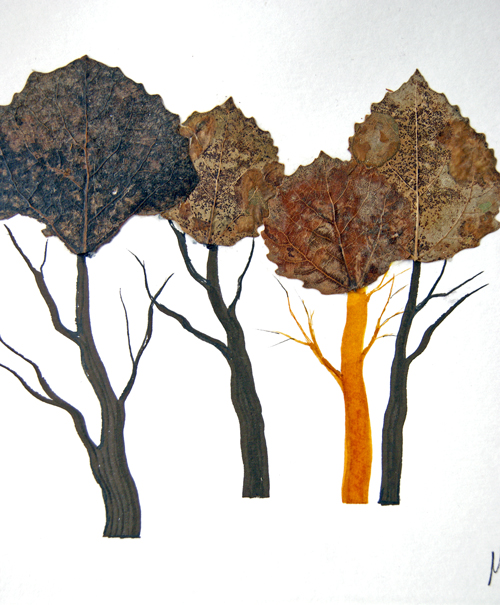 Toisenlaiset puut